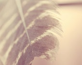 Feather print, feather photography, boho nursery, feather wall art print, feather boho decor, feather pictures, feather art print