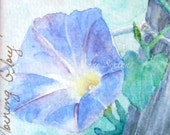 Morning Glory Blossom  Watercolor Giclee 8x8 print