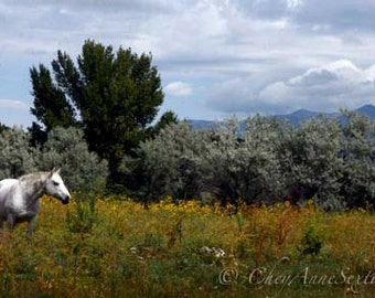Horse Landscape of southwest vista - As I Gazed upon her World - White Horse meadow 8x12 fine art giclee print