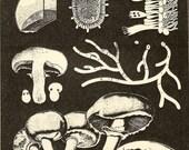 Radical Mycology (Zine)