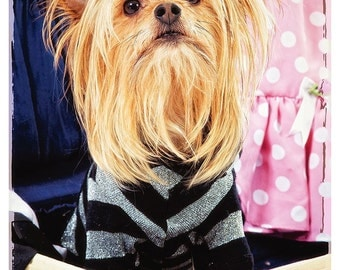Cute Yorkshire Terrier, Ready For a Night on the Town, 5x7 inch fine art photo, home decor, wall art