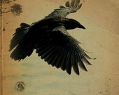 SALE----Raven Black Bird - Square Steampunk Halloween Wood Gold Rustic Wings. Poe Nevermore
