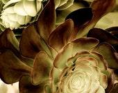 Succulent Art, Botanical Prints, Nature Wall Decor, Succulent Photography, Succulent Art Print, Garden Art, Nature Lover Gift, Large Art
