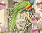 Colorful Bird Printable Image, Digital Background, Royal Vintage Illustration