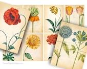 Botanical Illustrations Printable Gift Tags, Vintage Floral Collage Sheet, Printable Images, Digital Background, Instant Download