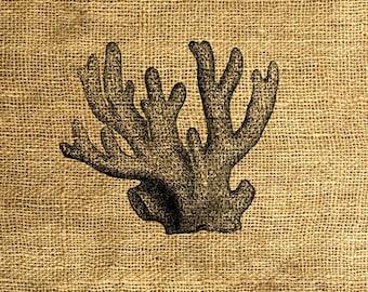 INSTANT DOWNLOAD Vintage Coral Illustration - Download and Print - Image Transfer - Digital Sheet by Room29 - Sheet no. 380