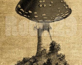 INSTANT DOWNLOAD Mushroom Vintage Illustration - Download and Print - Image Transfer - Digital Sheet by Room29 - Sheet no. 508