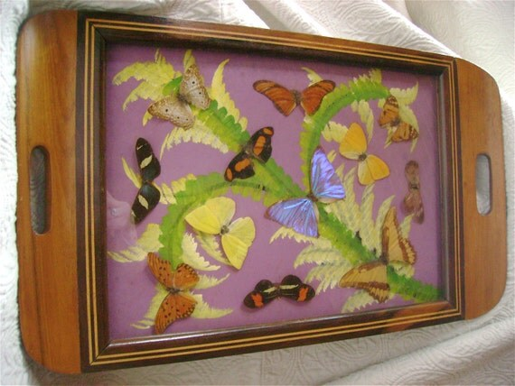 Vint. Real BUTTERFLY Tray - Inlaid wood
