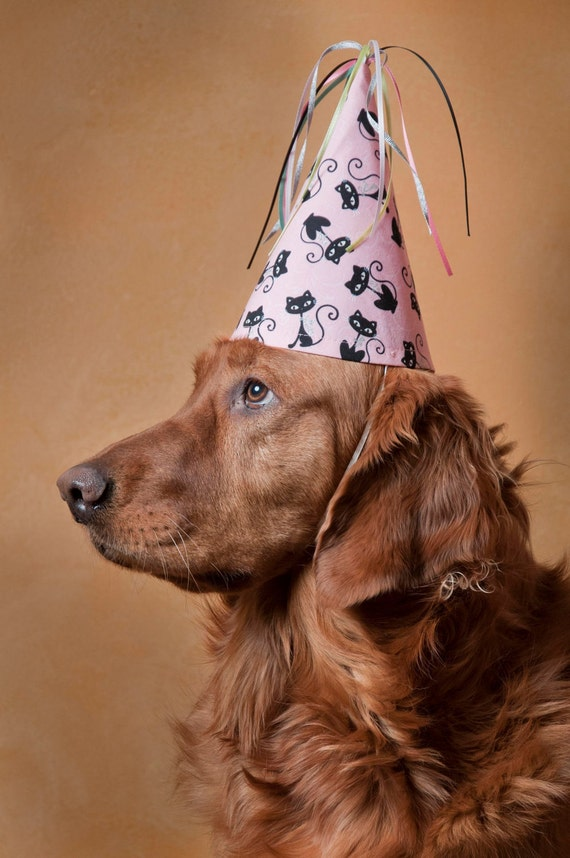 Dog-Party Hat-Siamese Cat-Pink-Birthday Hat