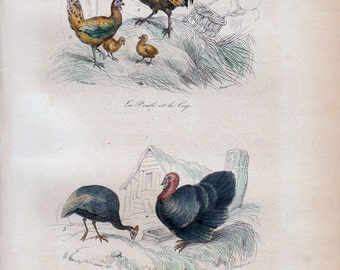 1870 rare Antique Victorian CHICKEN print By BUFFON, chicken rooster and chicks  and  turkey