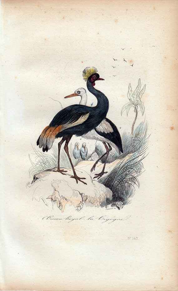 1870 rare Antique Victorian BIRD print By BUFFON, The royal bird  and the stork