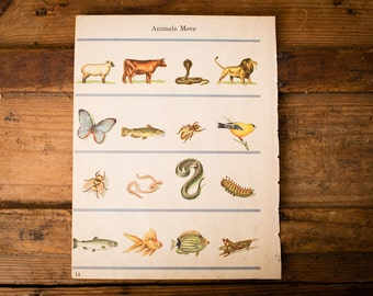 Lot of 65 Vintage Color Animal & Insect Illustrations, 5 Pages from 1943 Book