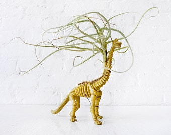Prehistoric Air Plant Dino Dood - Mr. Bones - Vegetarian Dinosaur Air Plant Garden- Featured on HBO Girls