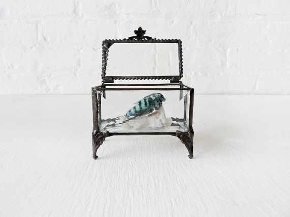 Sleeping Blue Beetle on Crystal Quartz in Beveled Glass Jewelry Box