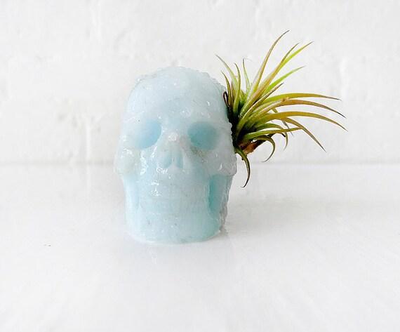 10% SALE - Tribal Blue Boy - Aragonite Carved Skull Air Plant Garden