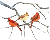 CARDINALS by Lorisworld - 10x8 Bird Print, Limited Edition