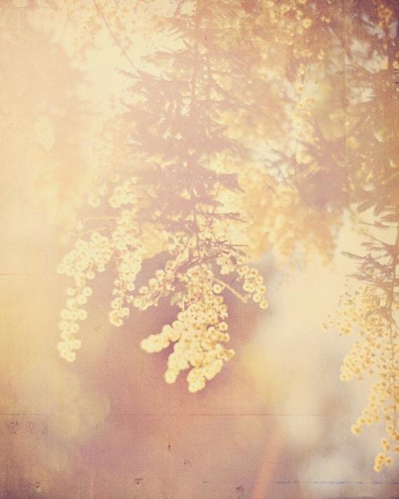 nature photography, acacia tree photograph, yellow baby room decor, warm hazy sunshine, ethereal, large wall art 24x36