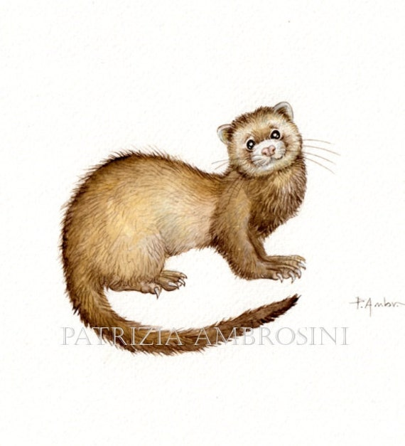 Original 9x7 Watercolour  FERRET no.1  NOT A PRINT ..Original Painting brown