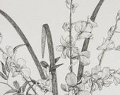 Orchid botanical drawing pen and ink original flowers