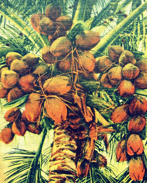 Coconut Palm Print, 8x10  Coconut Palm Art, Palm Tree, Palm Tree Art Coastal Art Coastal Decor Palm Tree Beach Decor Coastal, Tropical Print