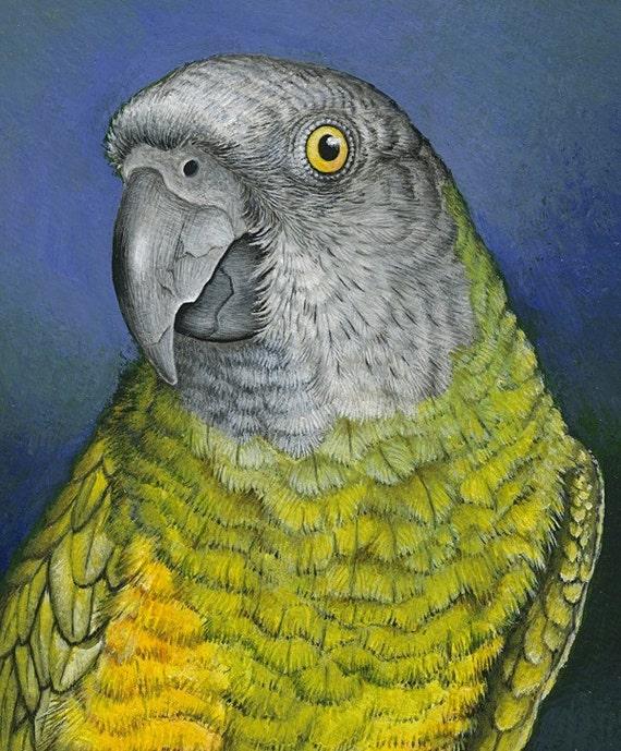A4 PRINT 'Senegal Parrot'