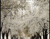 Under The Icy Boughs-8x10- FreeShipping