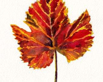 seasonal watercolor- Autumn Grape Leaf- art print