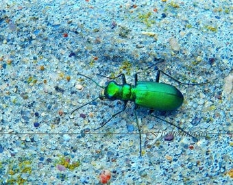 Green Beetle Insect Photo Print Fine Art Photography