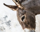 Lamu Donkey Portrait - Fine Art Photography - Wall Décor - Nature Photography