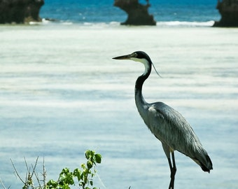 Watamu Heron - Fine Art Photography - Wall Décor - Nature Photography