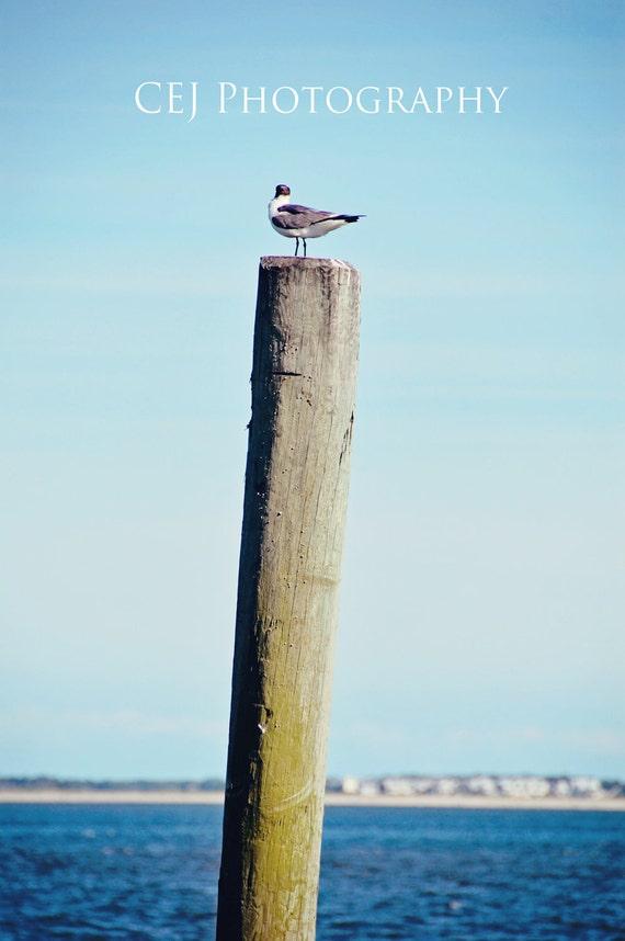 Vintage Seagull