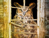 Portrait of a Great Horned Owl in a Window - a Fine Art Photograph