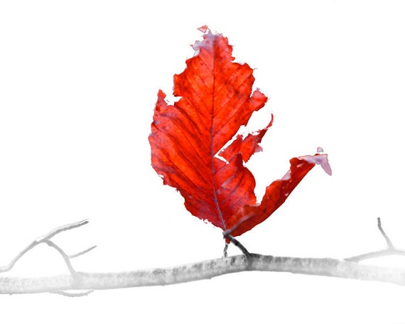 Red Leaf of Autumn on a Branch against a White Background No.0144RED A Fall Fine Art Nature Photograph