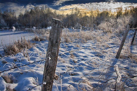 Morning Sunrise Winter Hoar Frost by a Fence Line in Alberta Canada No.22647 - A Fine Art Winter Landscape Photograph