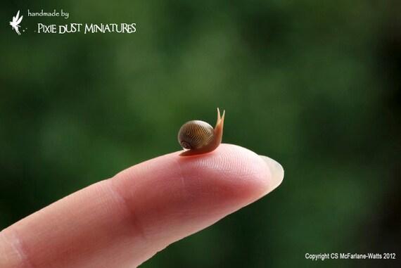 Brown Garden Snail - GARDEN RANGE