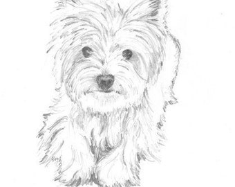"Casey print of pencil drawing Westie 8""x10"""
