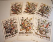 The Twelve Months of Flowers - Antique Book Prints by Robert Furber - The Complete Set of 12 Months of Flowers