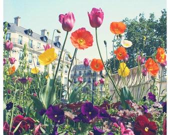 Paris Floral Photography - Twin Tulips -  8x8, 12x12, or 20x20 Flowers, Springtime, April in Paris, colorful - Original Fine Art Photography