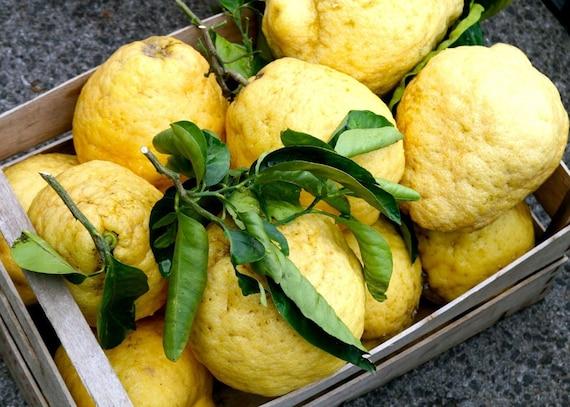 Lemon Art Print - Amalfi Lemon Photograph Food Photography Italian Kitchen Photo Citrus Yellow Home Decor Italy Mediterranean Decor