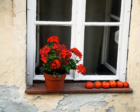 Hungary Photography - Red Geraniums and Tomatoes Photo  - Farmhouse Decor Sopron Art Print Window Photo European Travel Photography