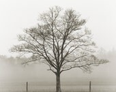 black and white photography, trees, tree, nature, landscape, fog / fine art 8 x 8 print