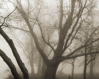 tree photography, trees, landscape photography, nature, fog, foggy, mystery / 8 x 8 print