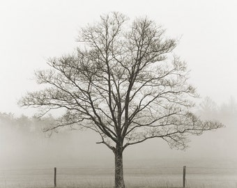 black and white photography, tree photography, trees in fog, landscape photography, fog photography, fine art photography, cades cove
