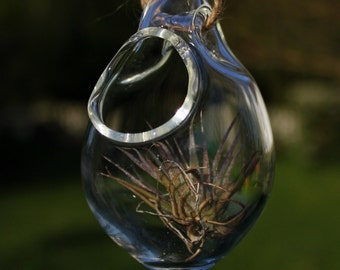hand blown glass tiny plant terrarium with hollow hoop