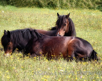 Resting in the meadow Fine Art Photography Download