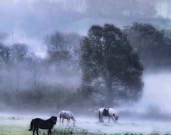 Morning in the meadow  Fine Art Photography Download