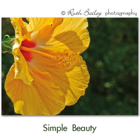 "Yellow Hibiscus - Photography Greeting Card & Sticker - Quote inside - ""Simple Beauty"" - Robert Browning"
