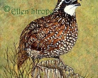 PRINTS, giclee prints, bobwhite quail, bird decor, bobwhilte decor, cabin decor, wildlife decor