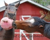 HORSE Greeting Card Equine Photography Horses Play With Pink Jolly Ball