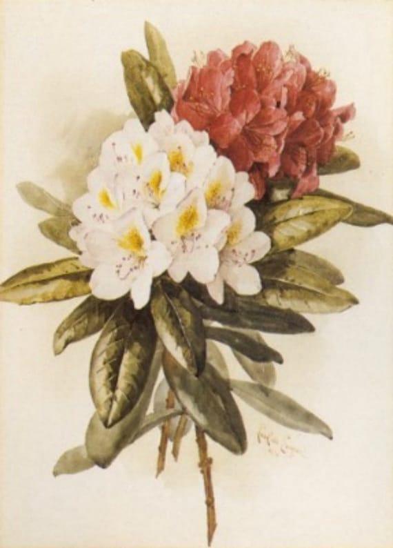 Rhododendron - Cross stitch pattern pdf format
